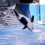 Former Carnival Cruise Line executive named CEO of SeaWorld Entertainment
