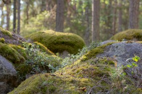 Sagoskog - av Malin