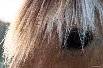 Hästlugg L