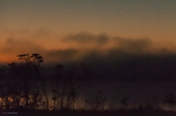 Efter solens nedgång kom dimman farande och skapade ett riktigt HÖSTRUSK i kvällningen