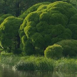 Grönt är skönt, ... - av Margareta