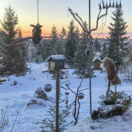5 december - Cricco fågelmatningen