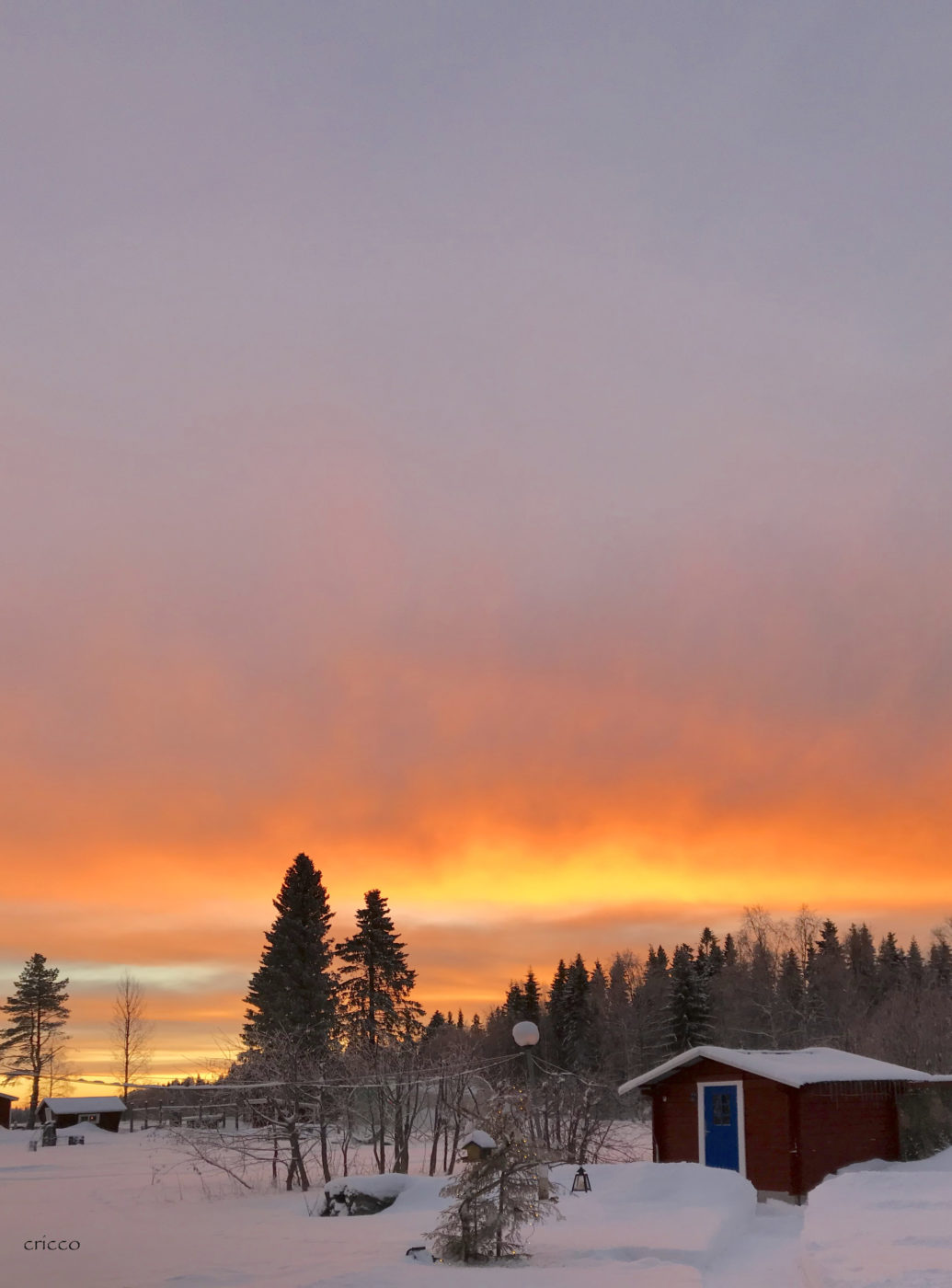 17 december - Cricco morgon