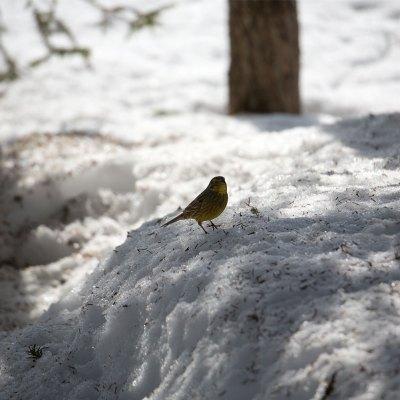 En skuggad fågel - av Eva
