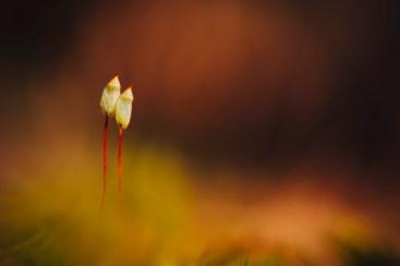 V24 Vem insprerar mig? -de små växterna av naturen formad -av Margareta