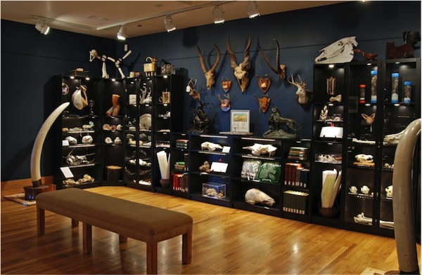 Cabinet of Curiosities at National Museum of Wildlife Art / Boing ...