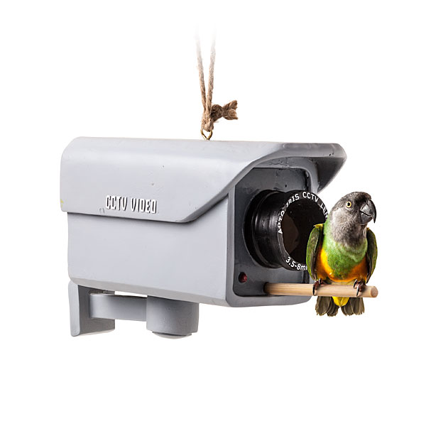 Surveillance camera bird-feeder / Boing Boing