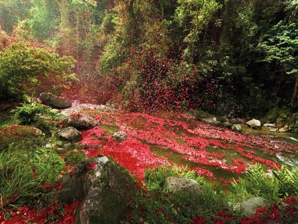 nick-meek-photographs-flower-petals-in-HD-designboom-01