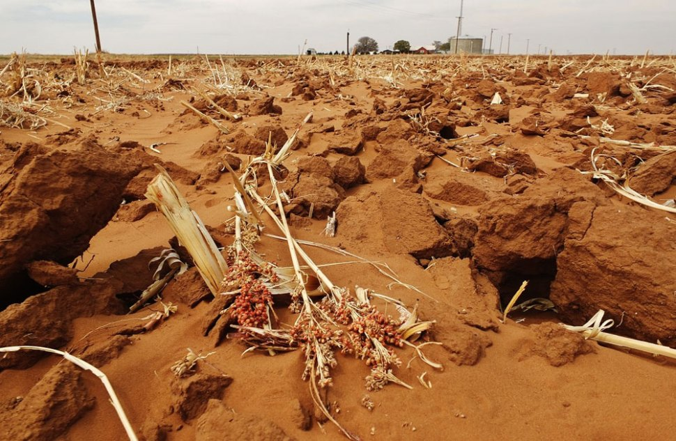 Photo: Tim Benson. Remnants of a milo field during a severe drought in Texas, 2014.