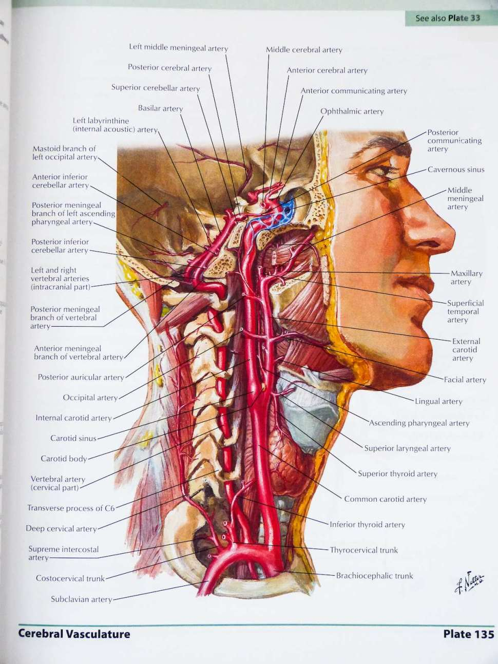 The Best Atlas Of Human Anatomy There Is Boing Boing