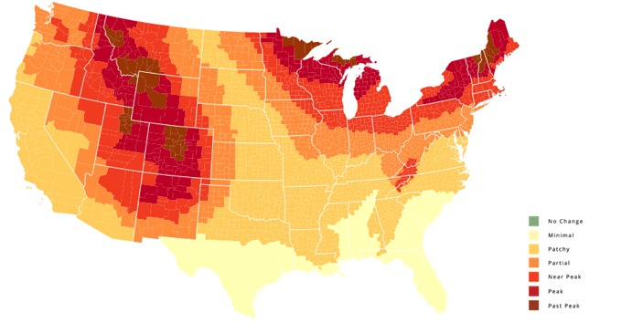 are you wondering when the leaves will peak in your area here s a chronological data map of leaves changing color throughout the usa