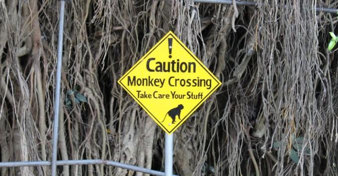 Monkeys Want Your Stuff