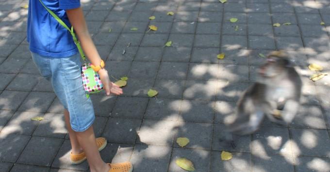Grab n Go: Mean monkey snatches a banana.