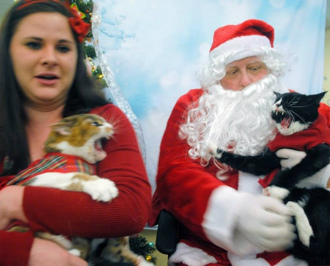 woman takes her two cats to visit santa claus all does not go well