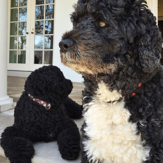 """Bo and Sunny hanging out on the colonnade."" By Pete Souza via Instagram"