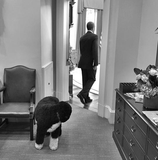 """Bo and potus."" By Pete Souza via Instagram"