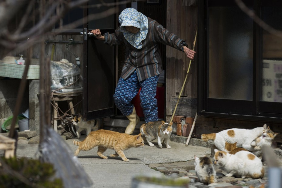 A local woman shoos away cats as she leaves her house on Aoshima Island on February 25, 2015. Thomas Peter/Reuters
