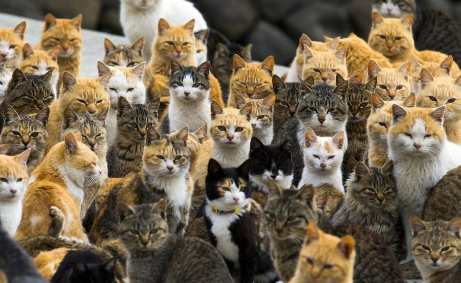 Cats crowd the harbor on Aoshima Island in the Ehime prefecture of southern Japan on February 25, 2015. Thomas Peter/Reuters