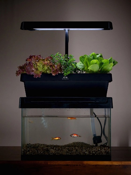 Desktop Aquaponics System Turns Your Fish Tank Into A Garden Boing Boing