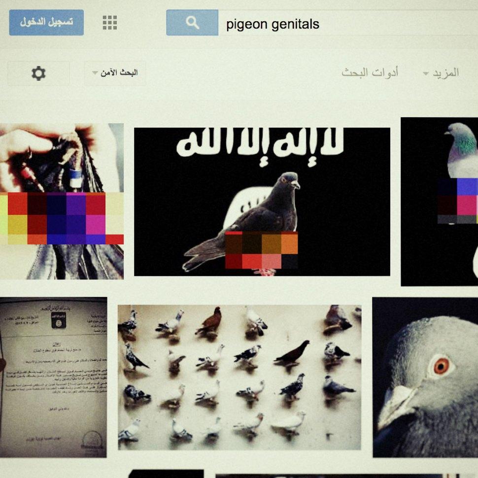 pigeon-genitals