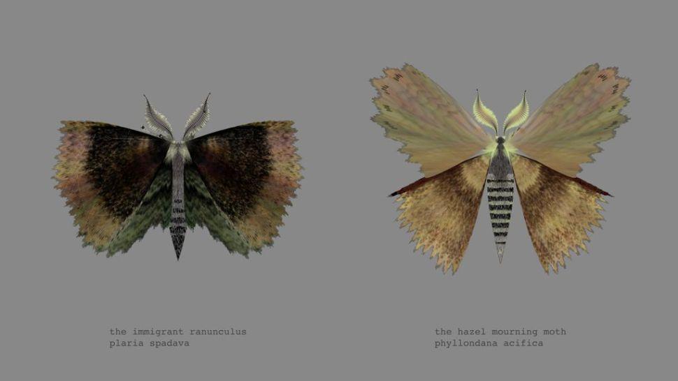 mothgen3