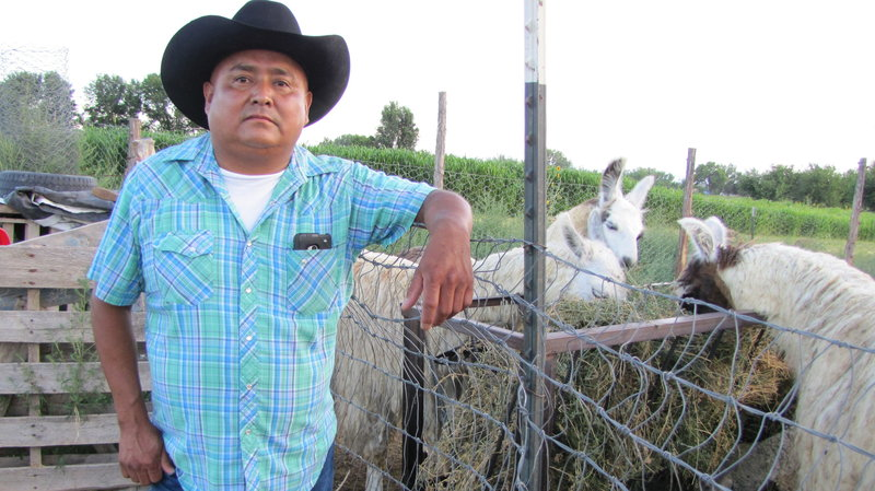 """After the Animas River spill, rancher Irving Shaggy is forced to travel a 70-mile round trip to get water for his livestock. """"It's going to be a long struggle,"""" he says. Laurel Morales/KJZZ"""