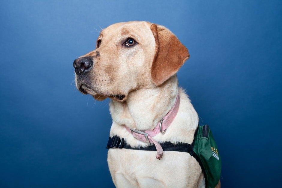 Psychiatric Service Dog Society Ptsd