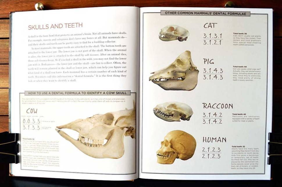 Cabinet Of Curiosities Book