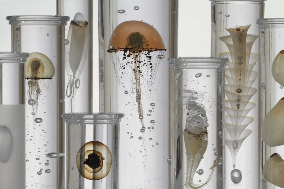 Jellyfish-Jars-detalle-Steffen-Dam-Joanna-Bird-Gallery-London