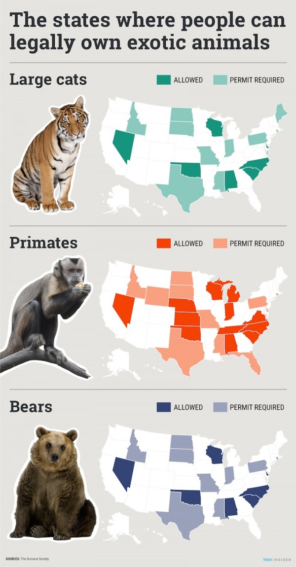 U S  states that allow you to keep tigers, monkeys and bears