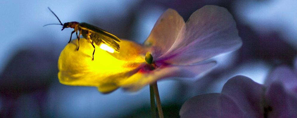 Among A Thousand Fireflies Children S Book Shows The
