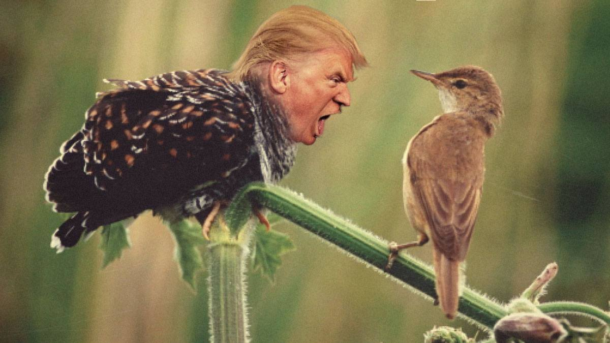 trump yelling at a bird