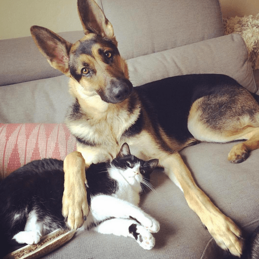This Instagram account documents the adorable friendship between a dog and cat