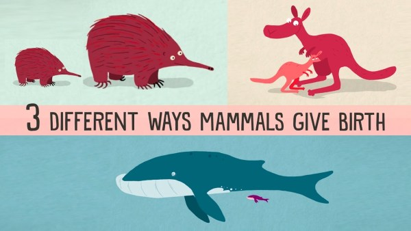 A crash course on the three types of mammal births