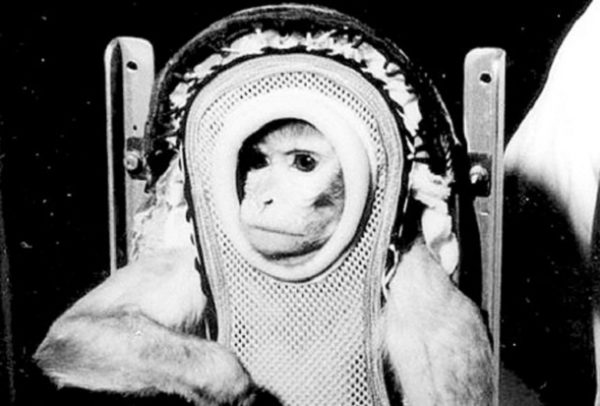 How many humans and animals have died while on space ...