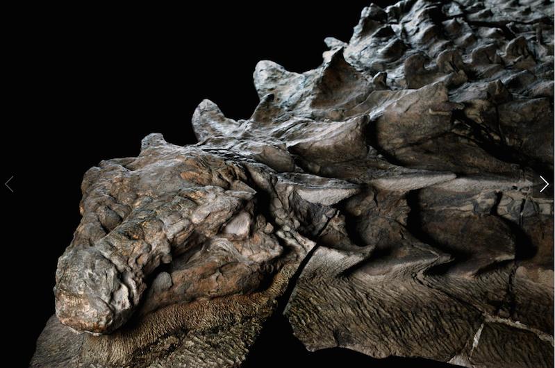 boingboing.net - Rusty Blazenhoff - Watch: Pole-dancing T-rex