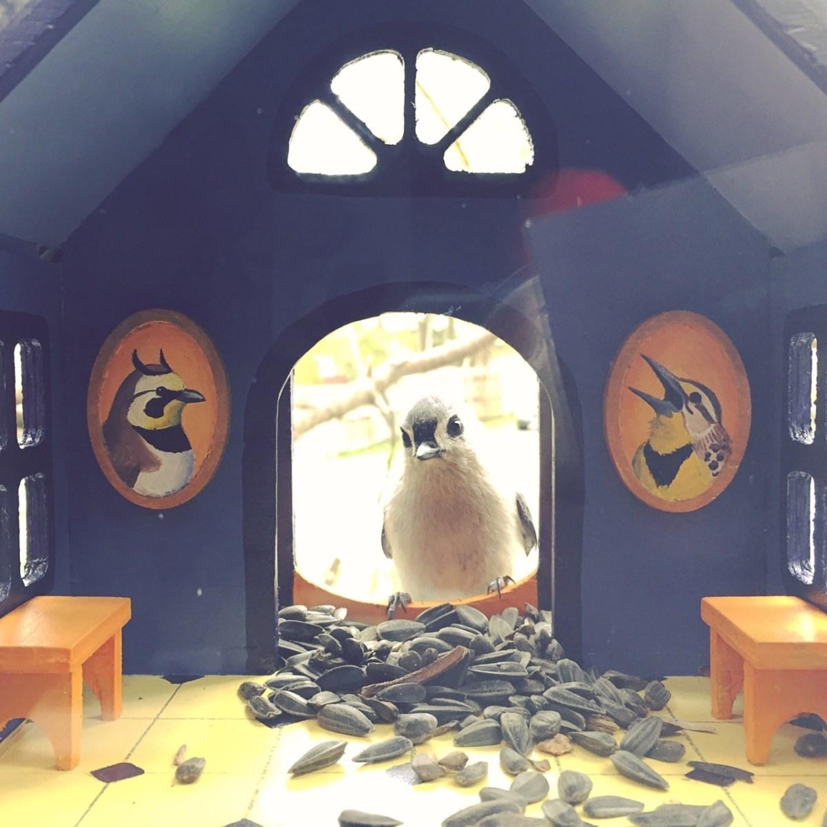 Birdhouse Window Feeders That Look Like Little Houses