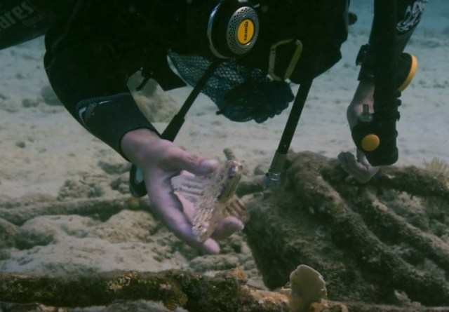 Scientists raising baby corals plan to plant over one million by 2021