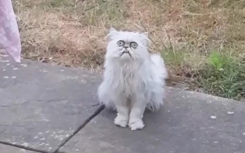 New York City man alarmed by presence of unusual cat  (NSFW)
