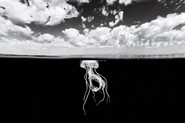 Gorgeous photos of undersea life, in black and white
