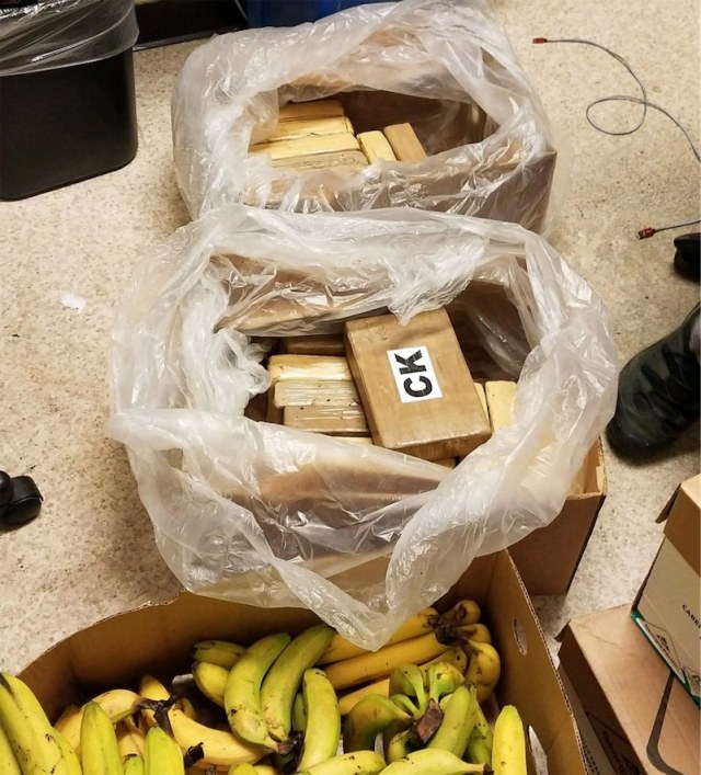 Supermarket workers found $550,000 worth of cocaine in with the bananas