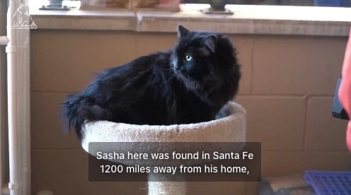 Cat found in New Mexico 5 years after being lost in Oregon