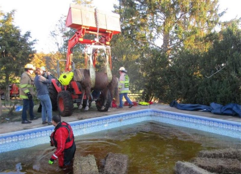 Horse rescued from Virginia swimming pool