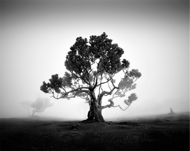 Absolutely magnificent black-and-white photos of trees in the fog