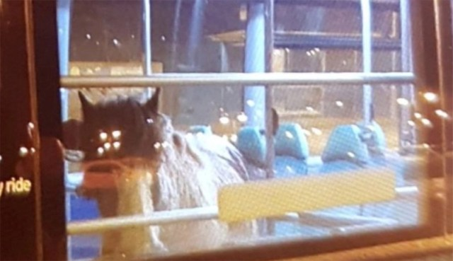 Lost horse takes city bus ride back home