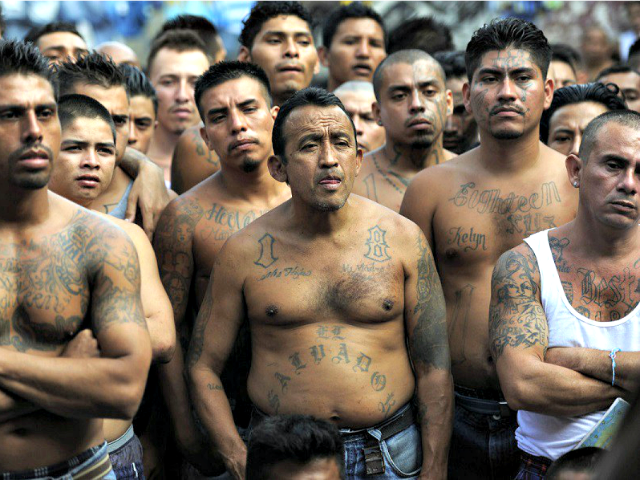 Image result for ms-13 daca