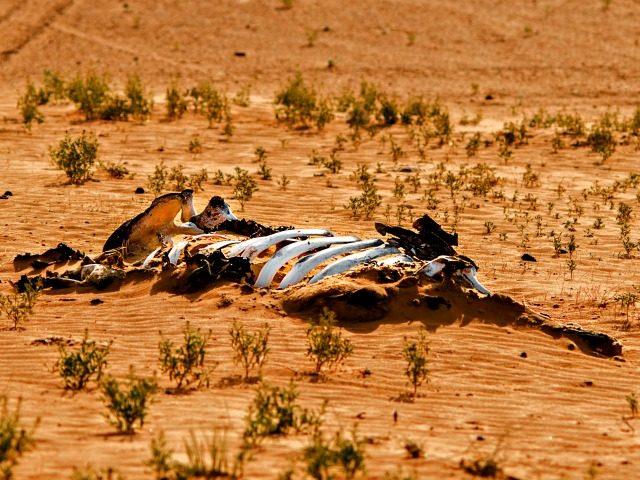 7000 Species Gone Extinct Due To Humans