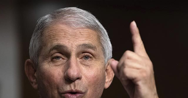 , Fauci: Rand Paul 'Inflammatory,' 'Slanderous' Comments Were 'Completely Out of Line', Nzuchi Times Breitbart