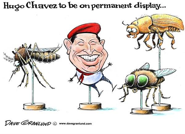 128400 600 Hugo Chavez on display cartoons