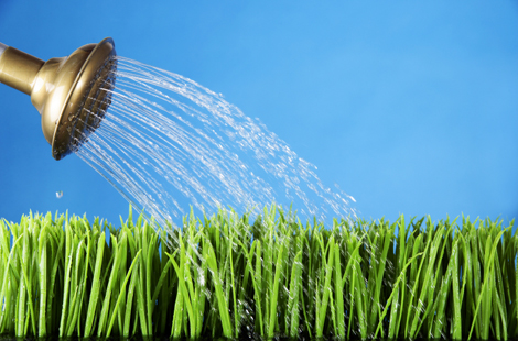 71812 Take The Time To Water Your Own Grass A Day In My Quote Book